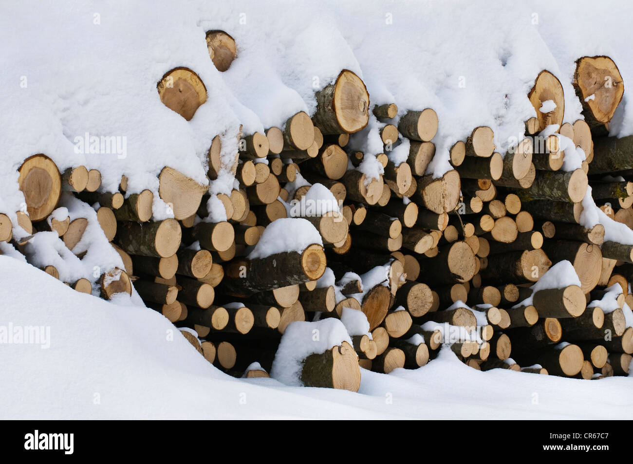 Stacked firewood, beech wood, in the snow - Stock Image