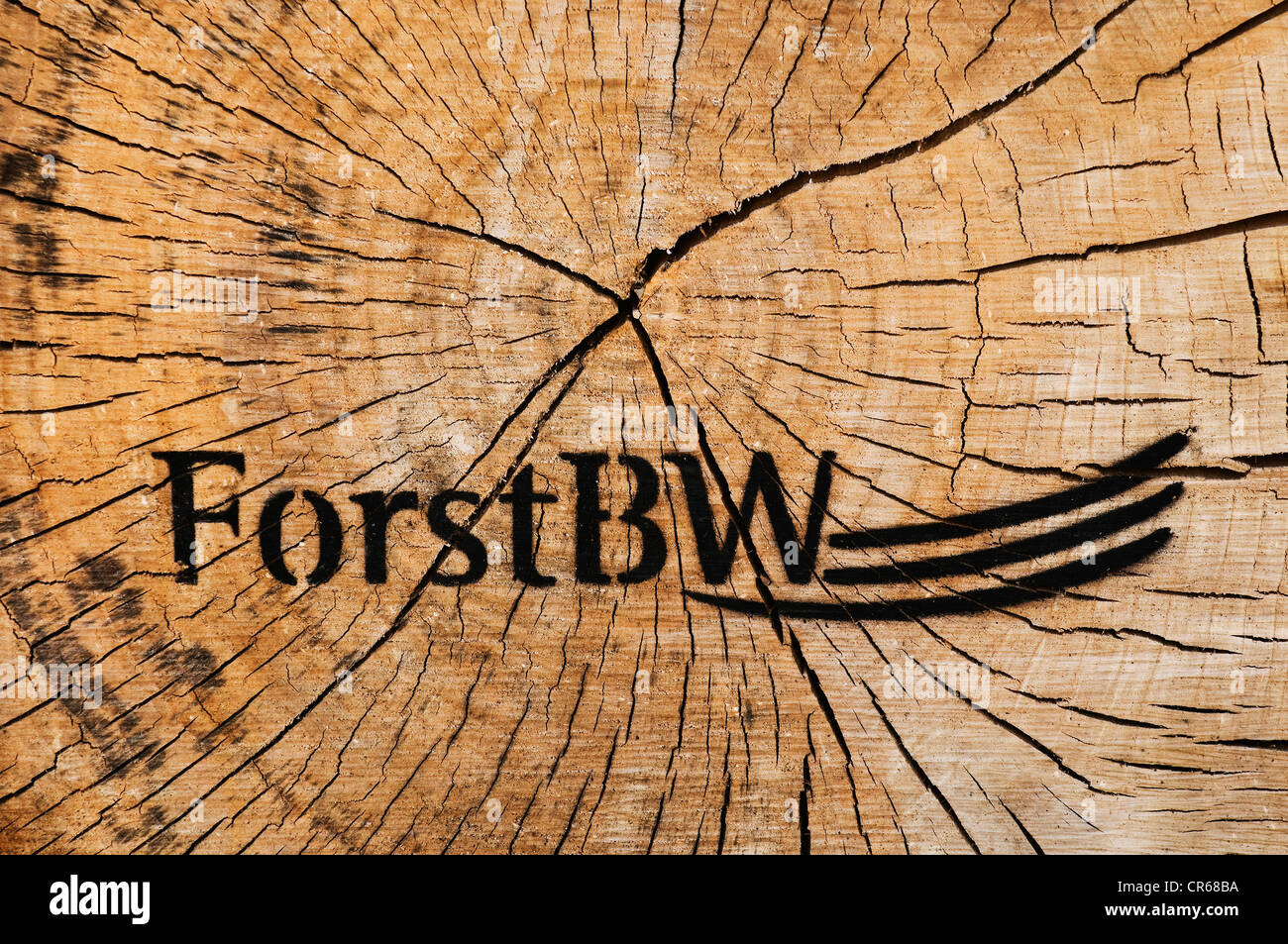 Slice of tree with a branded stamp of Forst BW, Forest Administration of Baden-Wuerttemberg, Germany, Europe - Stock Image