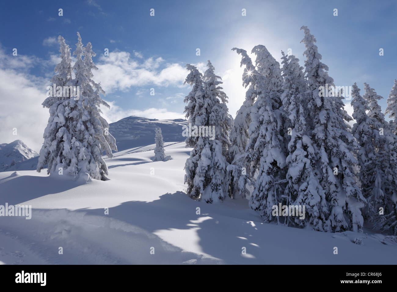 Austria, Styria, View of snow covered firs on Gasslhohe mountain - Stock Image