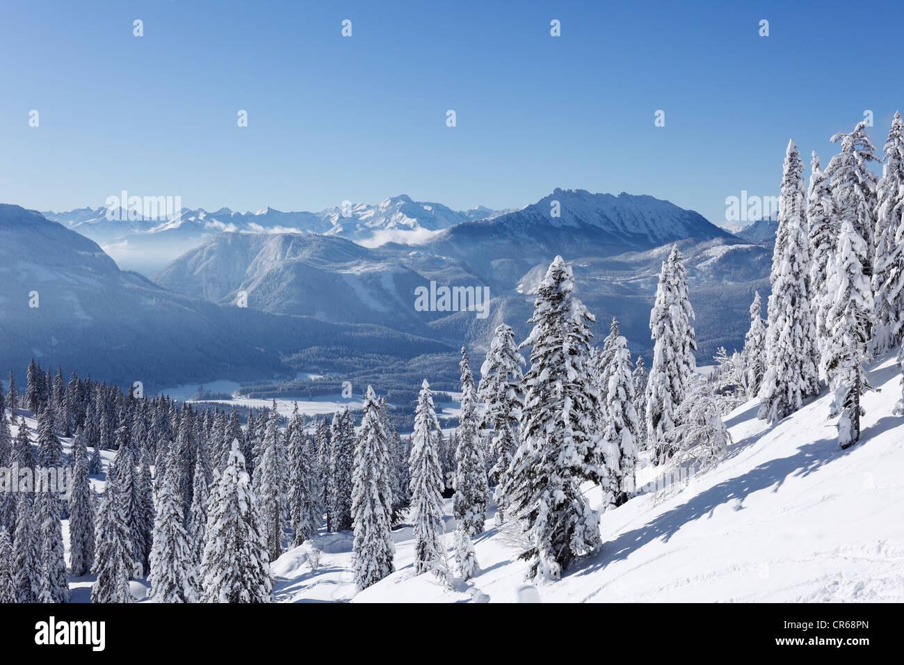 Austria, Styria, View of snowy fir tree on mountain - Stock Image