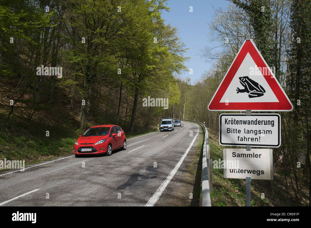 View of busy road in the spring, sign saying, Please drive slowly migrating toads! Collectors along the way - Stock Image