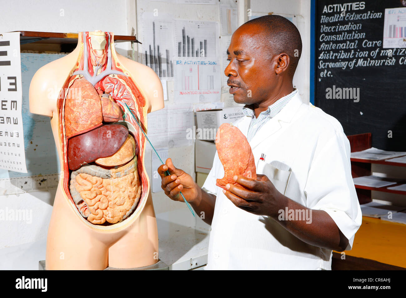 Doctor with an anatomical model, during a counseling session, hospital, Manyemen, Cameroon, Africa - Stock Image