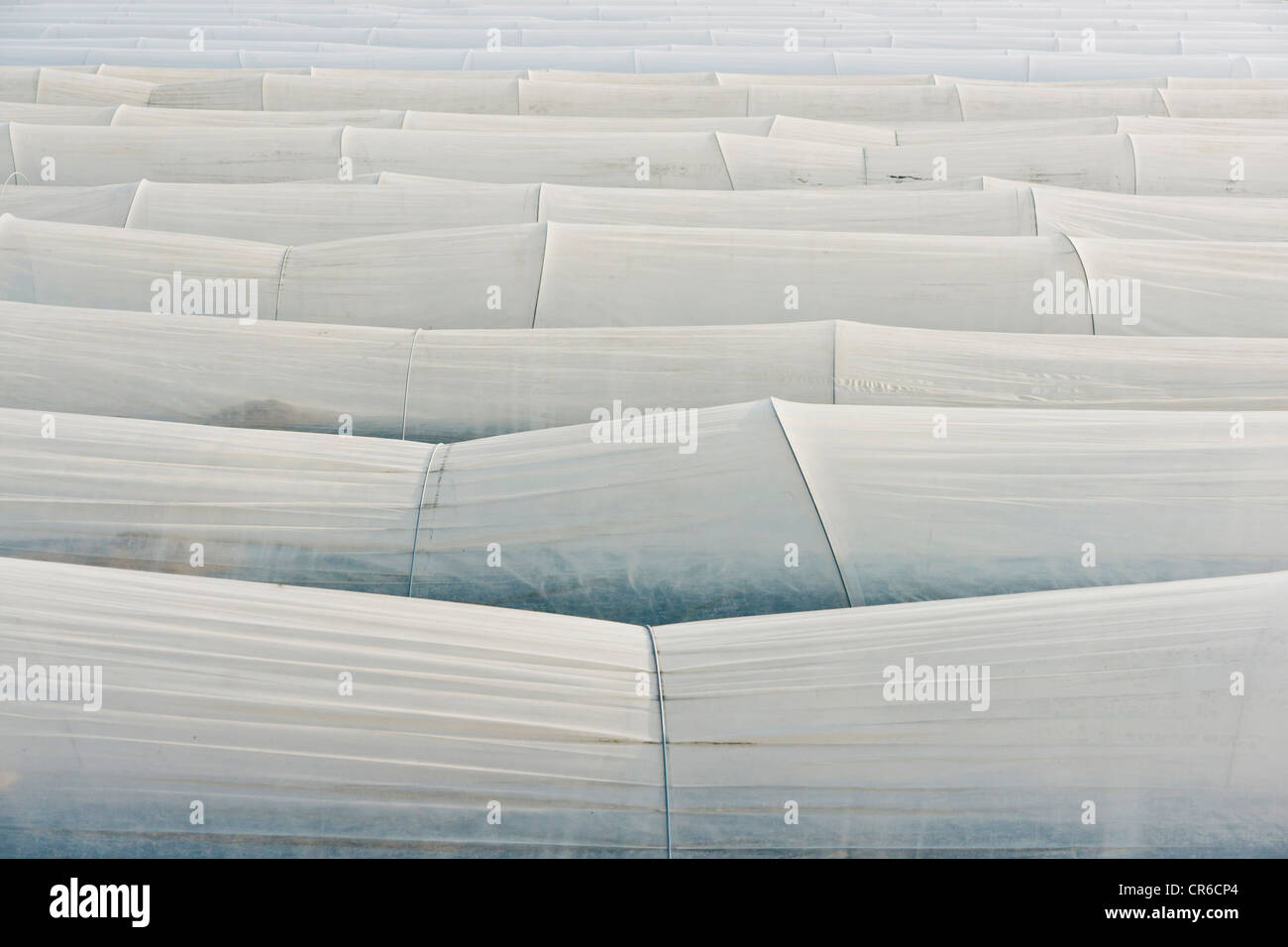 Germany, View of aspargus cultivation in late march - Stock Image