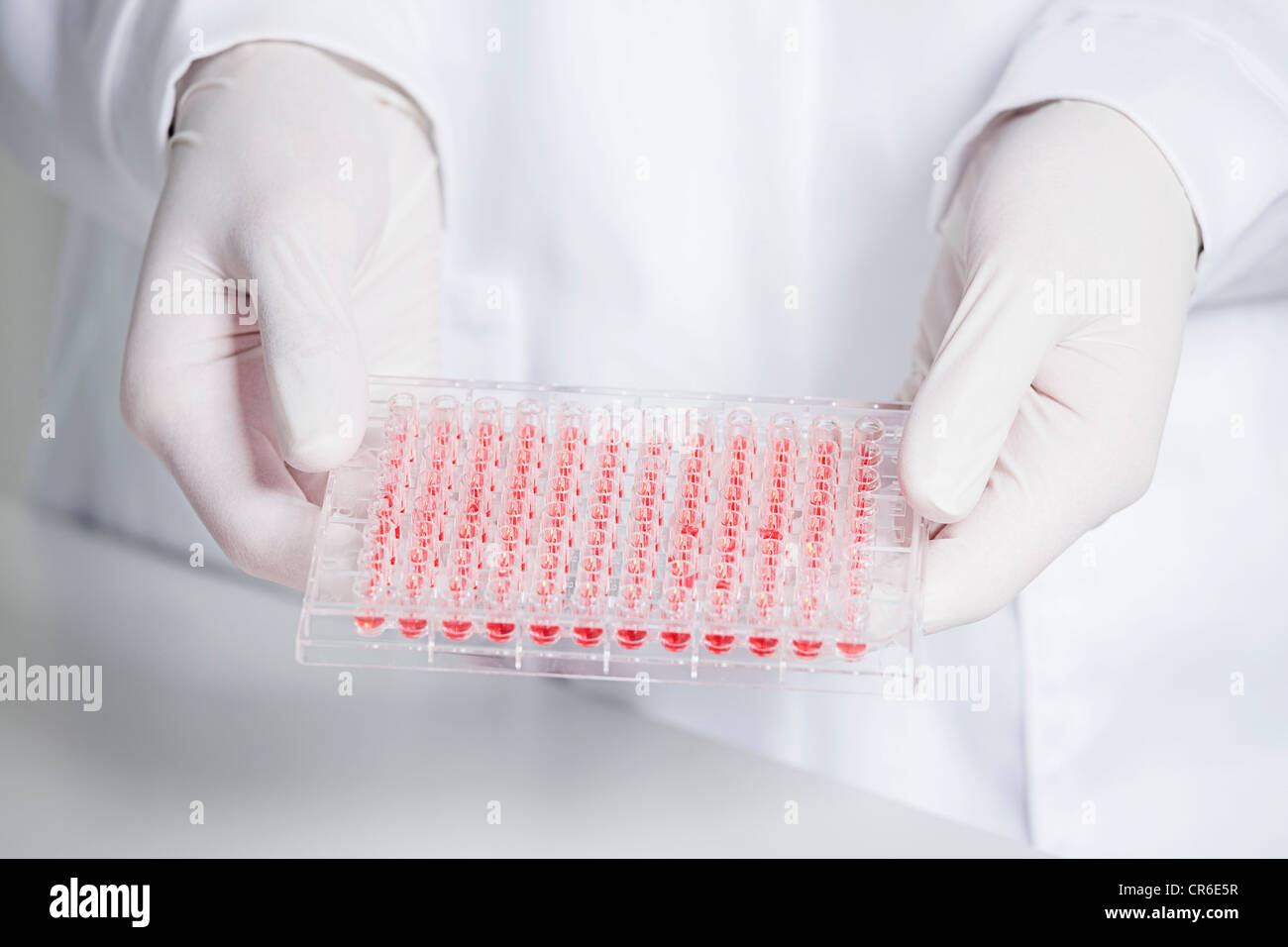 Germany, Bavaria, Munich, Scientist holding red liquid in test tray for medical research in laboratory - Stock Image