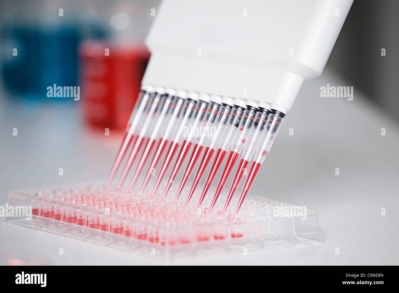 Germany, Bavaria, Munich, Multichannel pipette dispensing red reagent into test tray for medical research - Stock Image