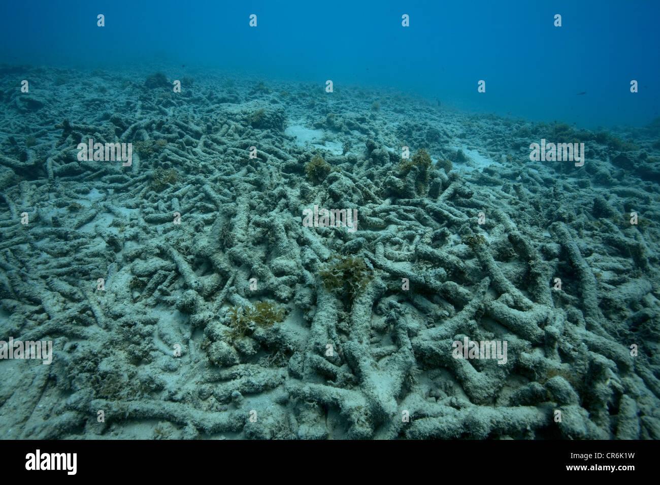 Coral bleaching, death of corals as a result of El Ninjo, Bullenbaai bay, Curacao, former Netherlands Antilles, - Stock Image