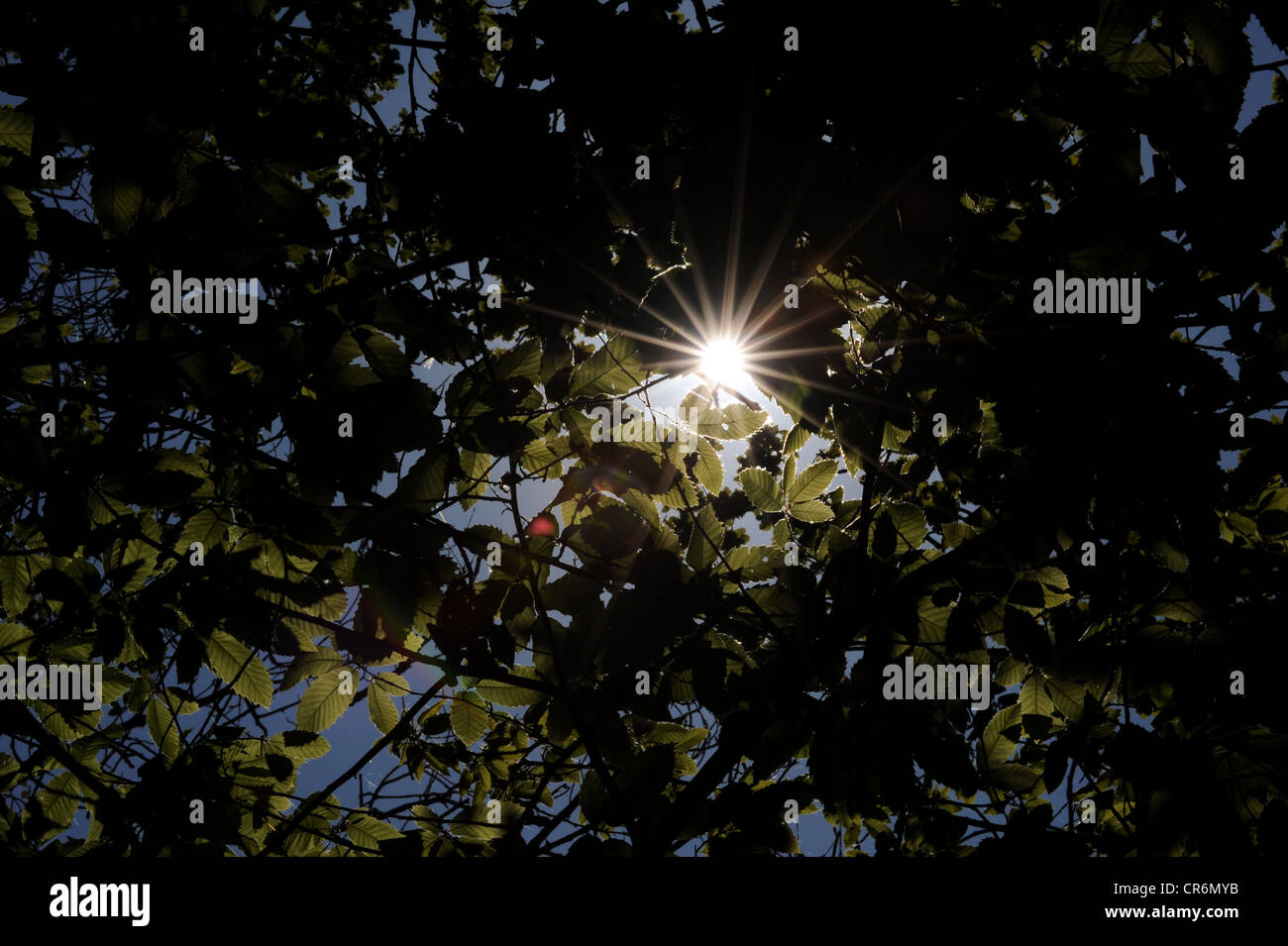 Sunshine breaks through a dark canopy of leaves - Stock Image