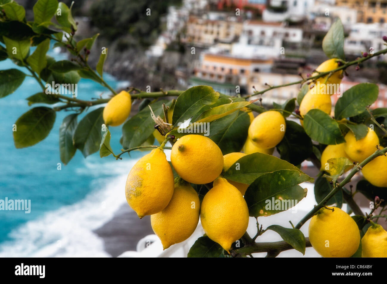 close up view of a lemon tree with fruit positano amalfi. Black Bedroom Furniture Sets. Home Design Ideas