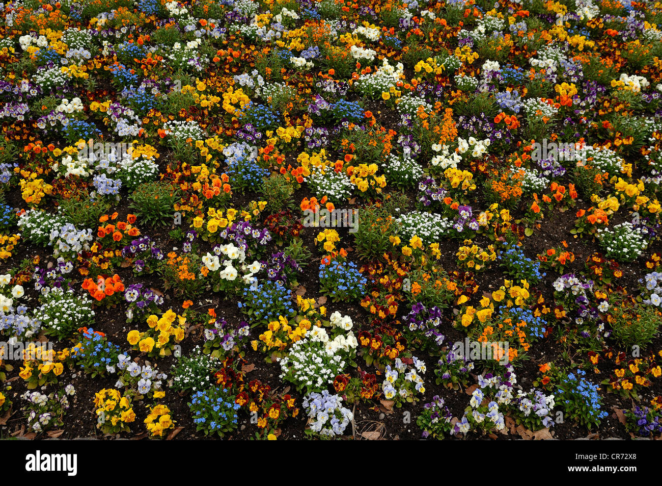 Colourful vegetation with various flowers in a park in Marckolsheim, Alsace, France, Europe - Stock Image