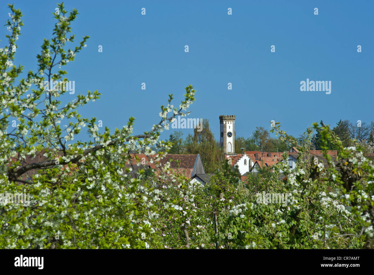 Townscape with Tuermel tower and apple tree blossom, Oberhausen, Pfalz, Rhineland-Palatinate, Germany, Europe Stock Photo