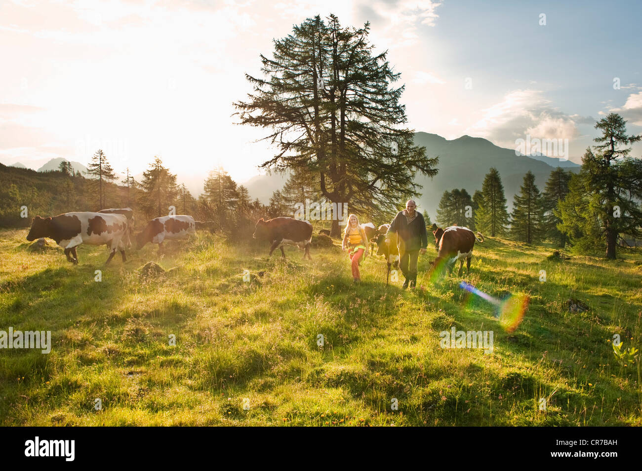Austria, Salzburg County, Woman and farmer walking in alpine meadow with cows Stock Photo