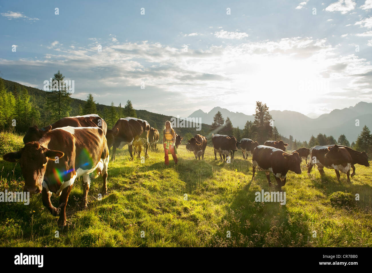 Austria, Salzburg County, Young woman walking in alpine meadow with cows Stock Photo