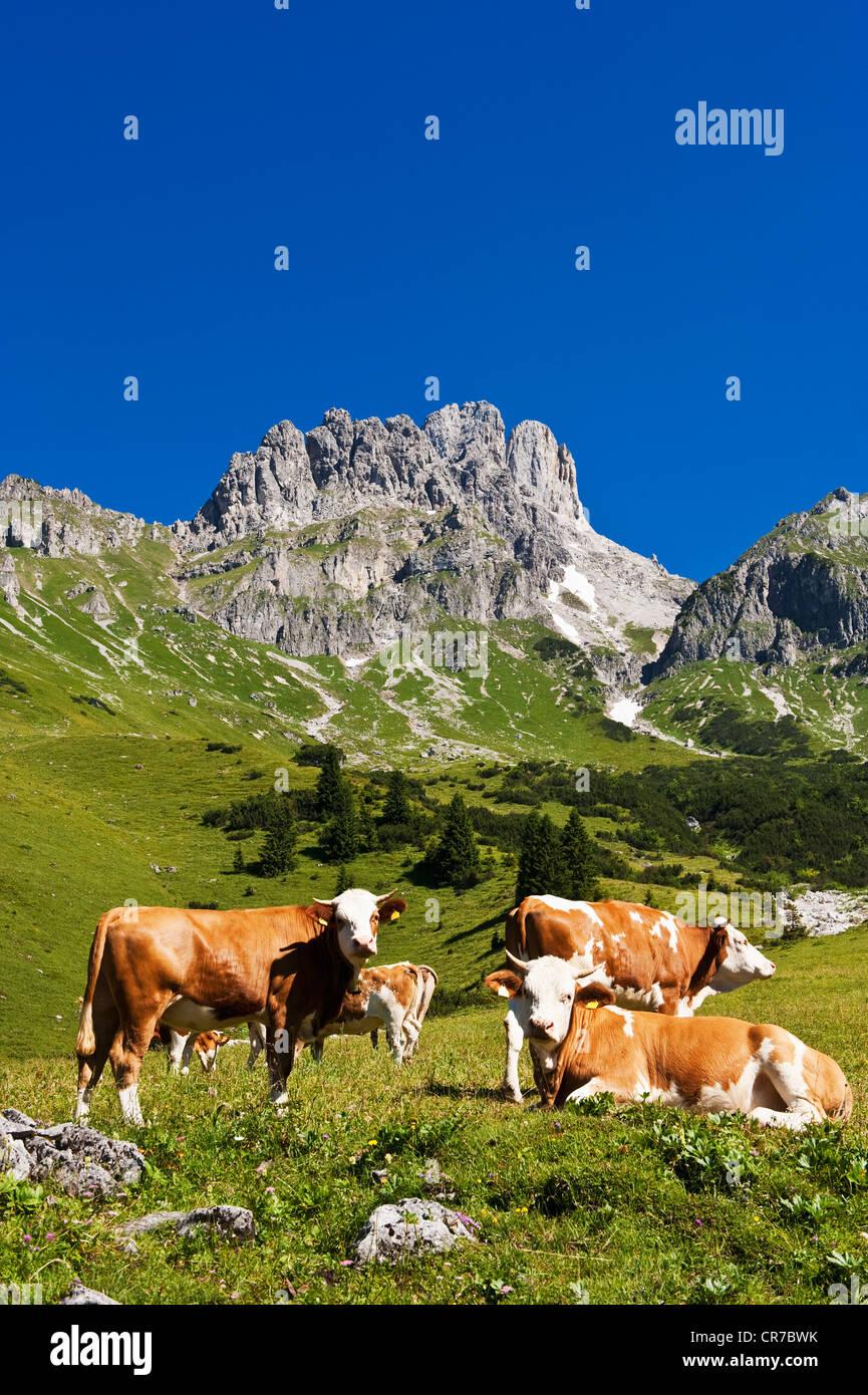 Austria, Salzburg County, Cows on alpine pasture in front of Mount Bischofsmutze Stock Photo