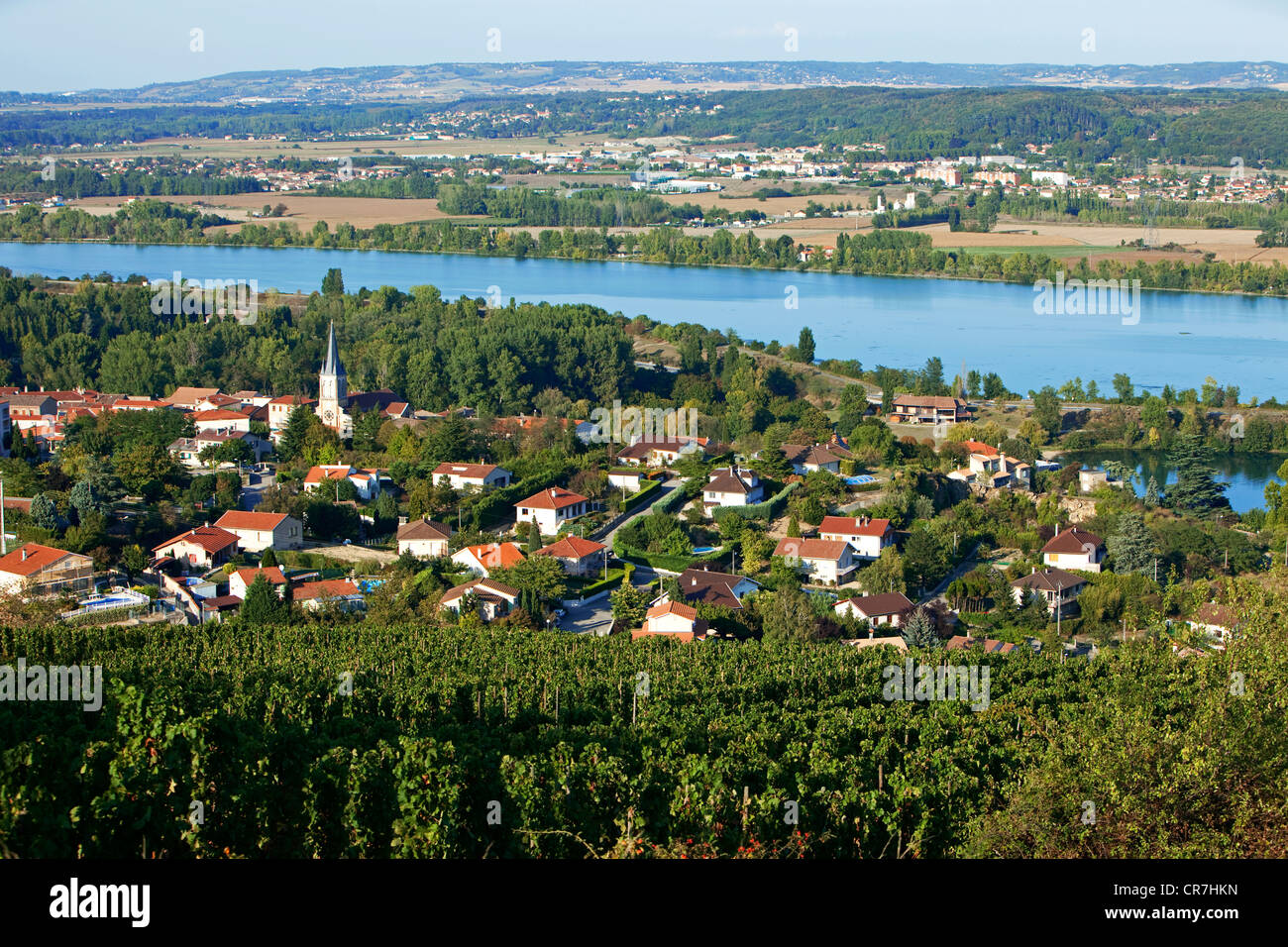France, Loire, Saint Pierre de Boeuf, the Rhone river and the Condrieu designation vineyard - Stock Image