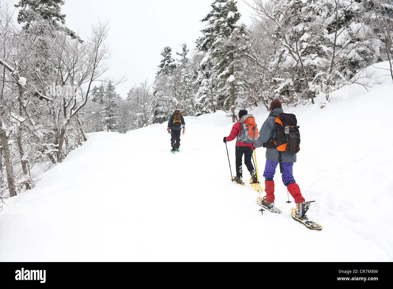 France, Isere, Parc Naturel Regional du Vercors (Natural Regional Park of Vercors), in winter, snowshoes hikking - Stock Image