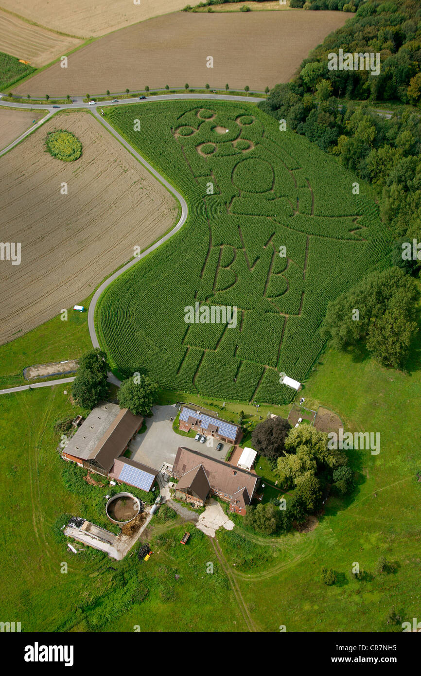 Crop circles in the shape of a character of BVB Borussia Dortmund football team, created by farmer Luenemann, in - Stock Image