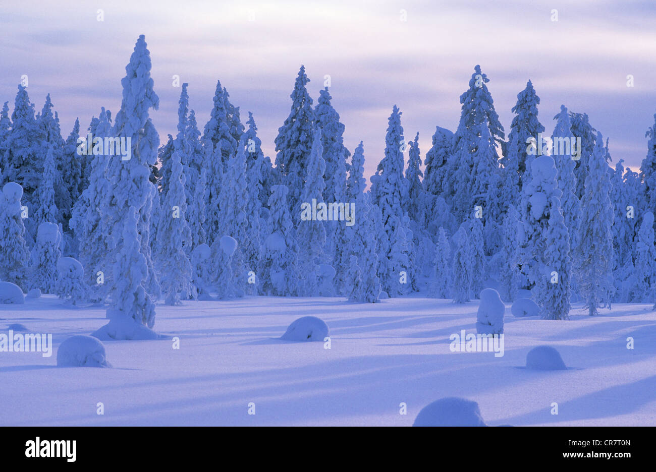 Finland, Lapland Province, Kuusamo, snowy landscape to the Russian border - Stock Image
