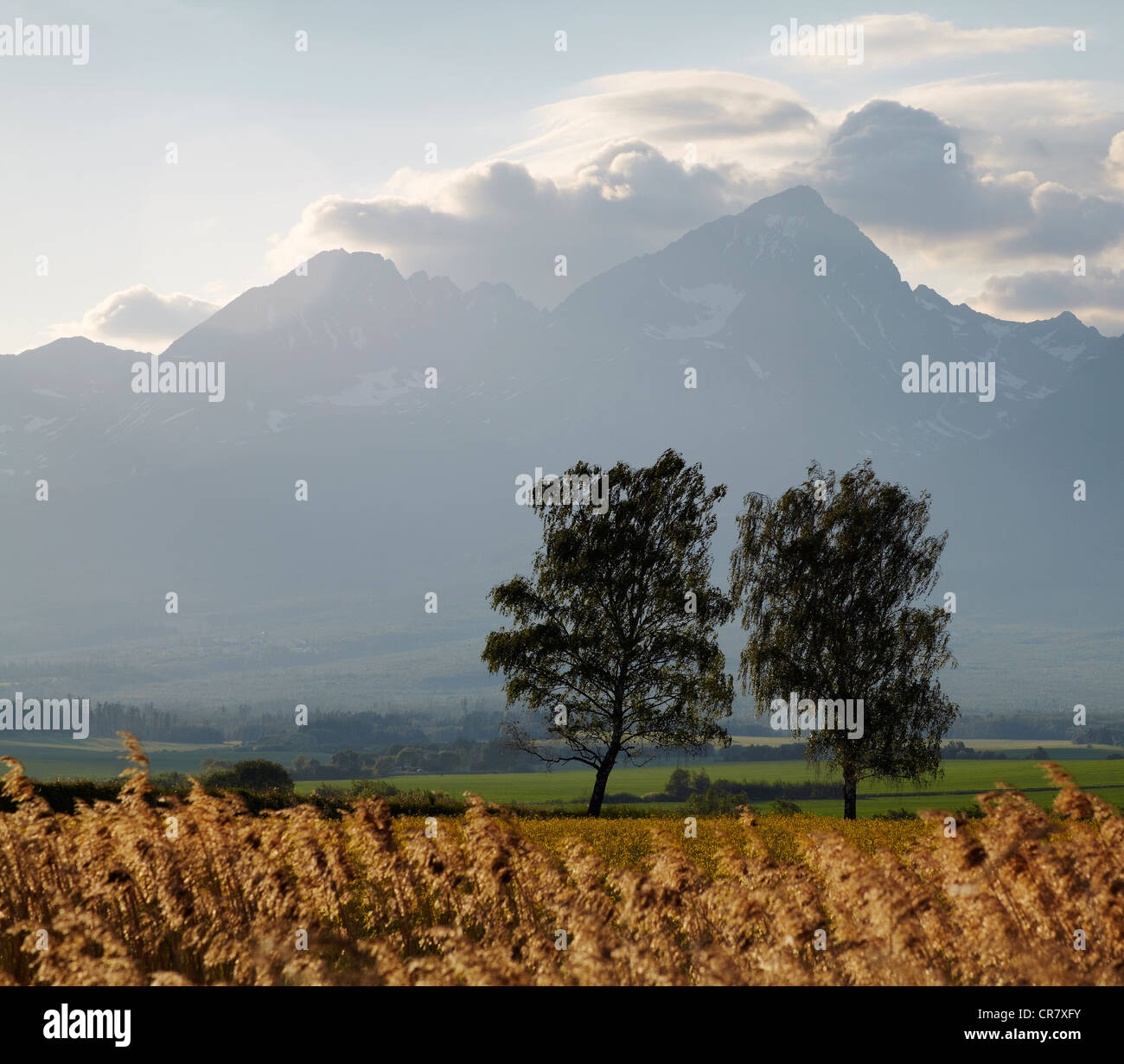 Two trees below cloud cover peaks of the high Tatra mountains in Slovakia - Stock Image