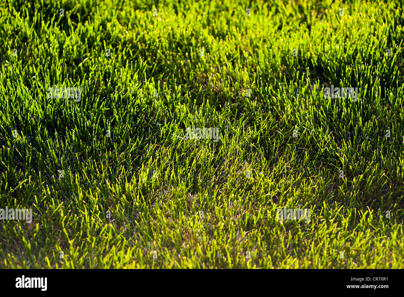 Backlit grass in the garden of a suburban home at sunset - Stock Image