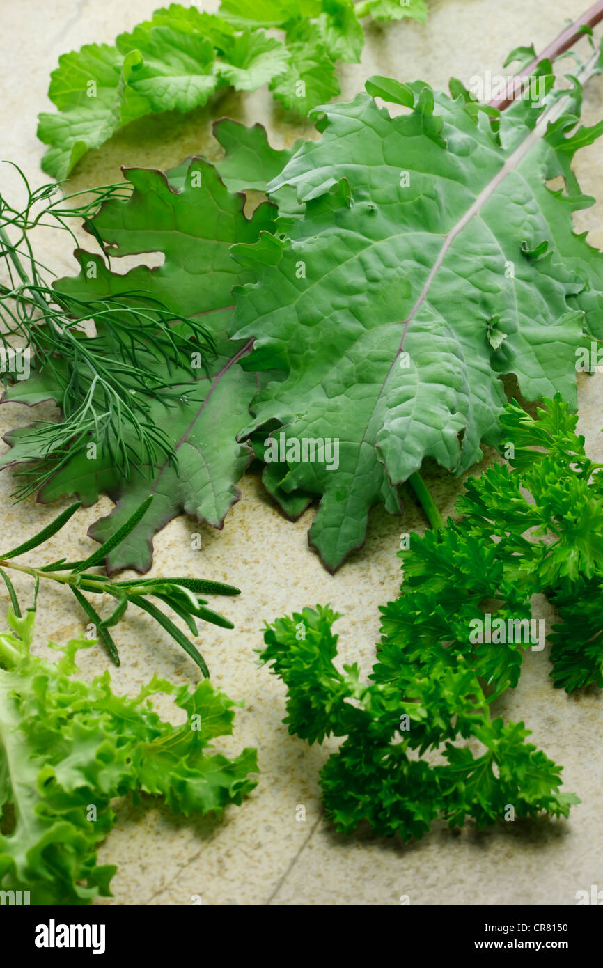Red kale, rosemary, parsley, lettuce, dill, - Stock Image