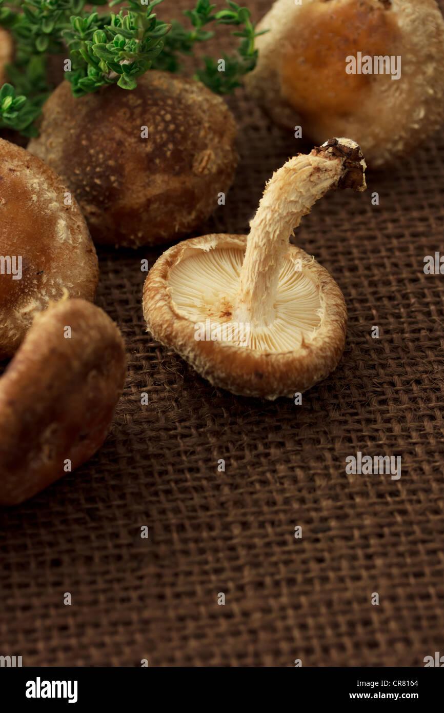 Whole Shitake Mushrooms - Stock Image
