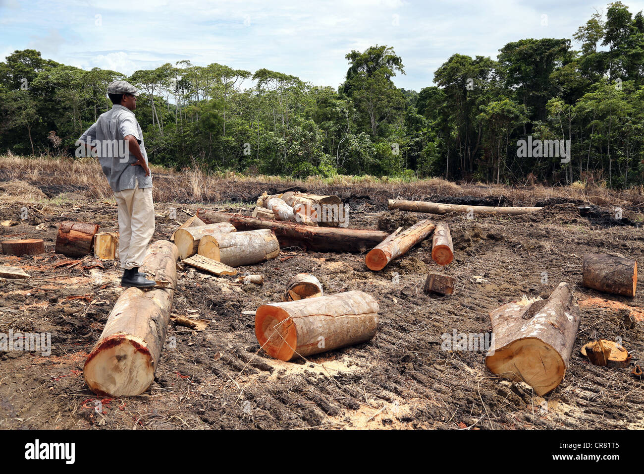 Lumberjack in a clearing of a log area, province of Madang, Papua Neuguinea Stock Photo