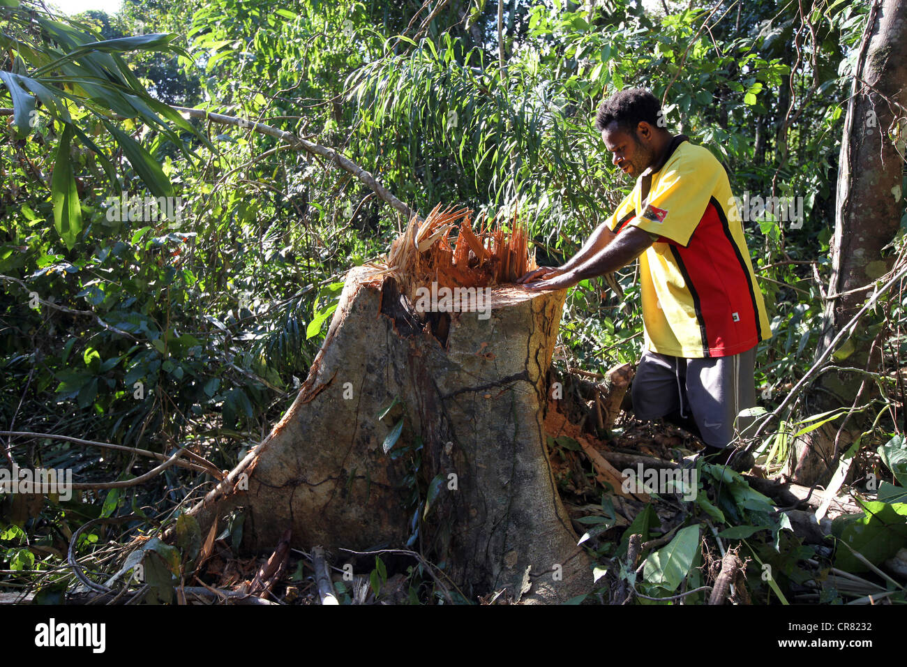 Lumberjack in a clearing of a log area, province of Madang, Papua Neuguinea - Stock Image