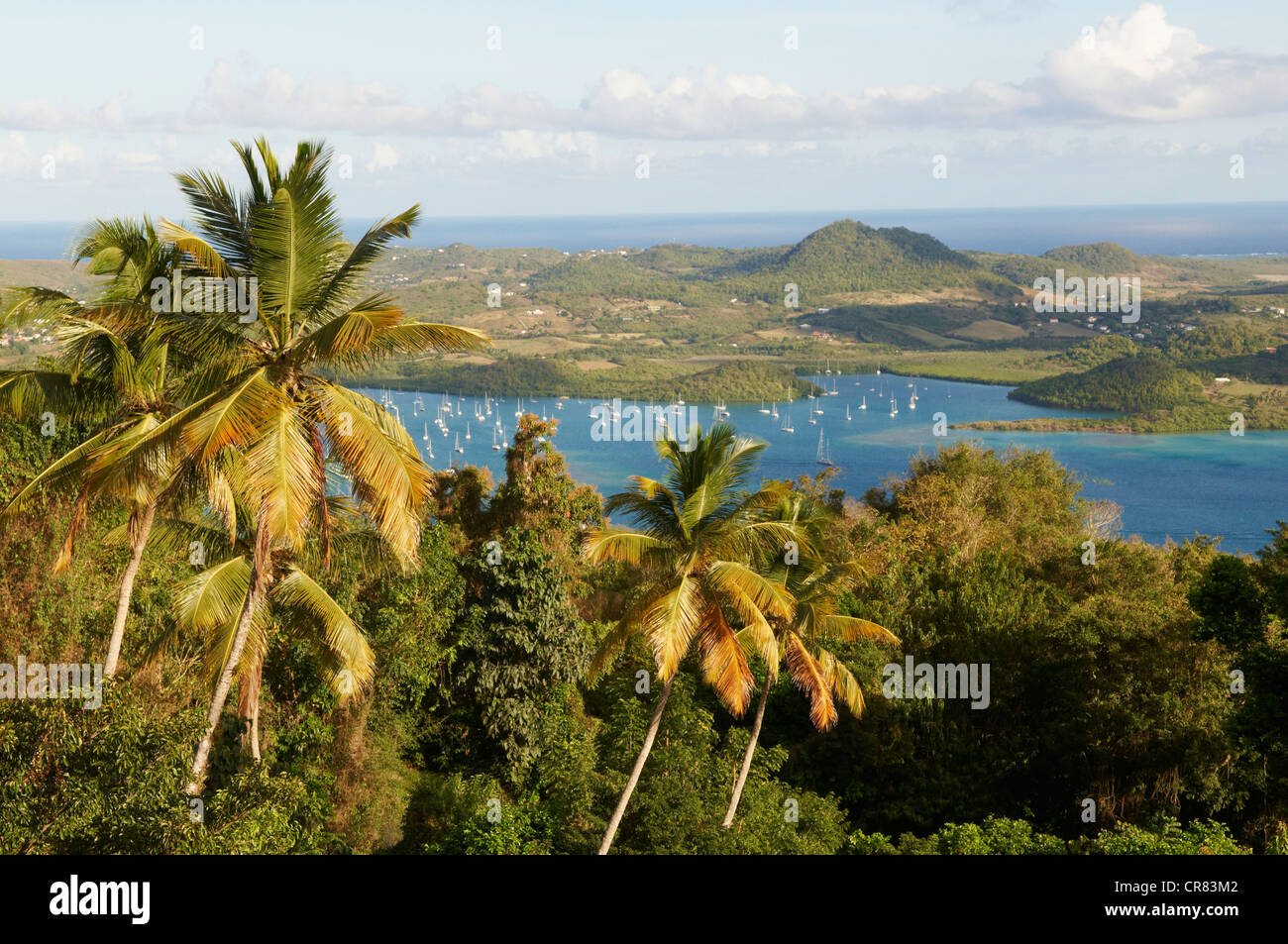 France, Martinique (French West Indies), Cul de Sac du Marin, palm trees - Stock Image