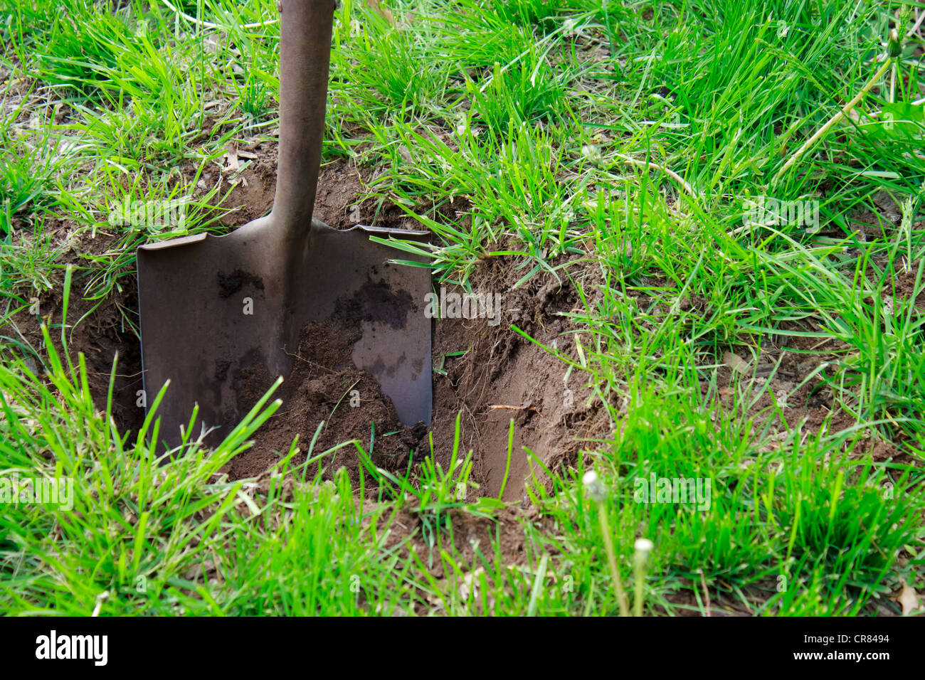 Shovel in the Soil (Spade) - Stock Image