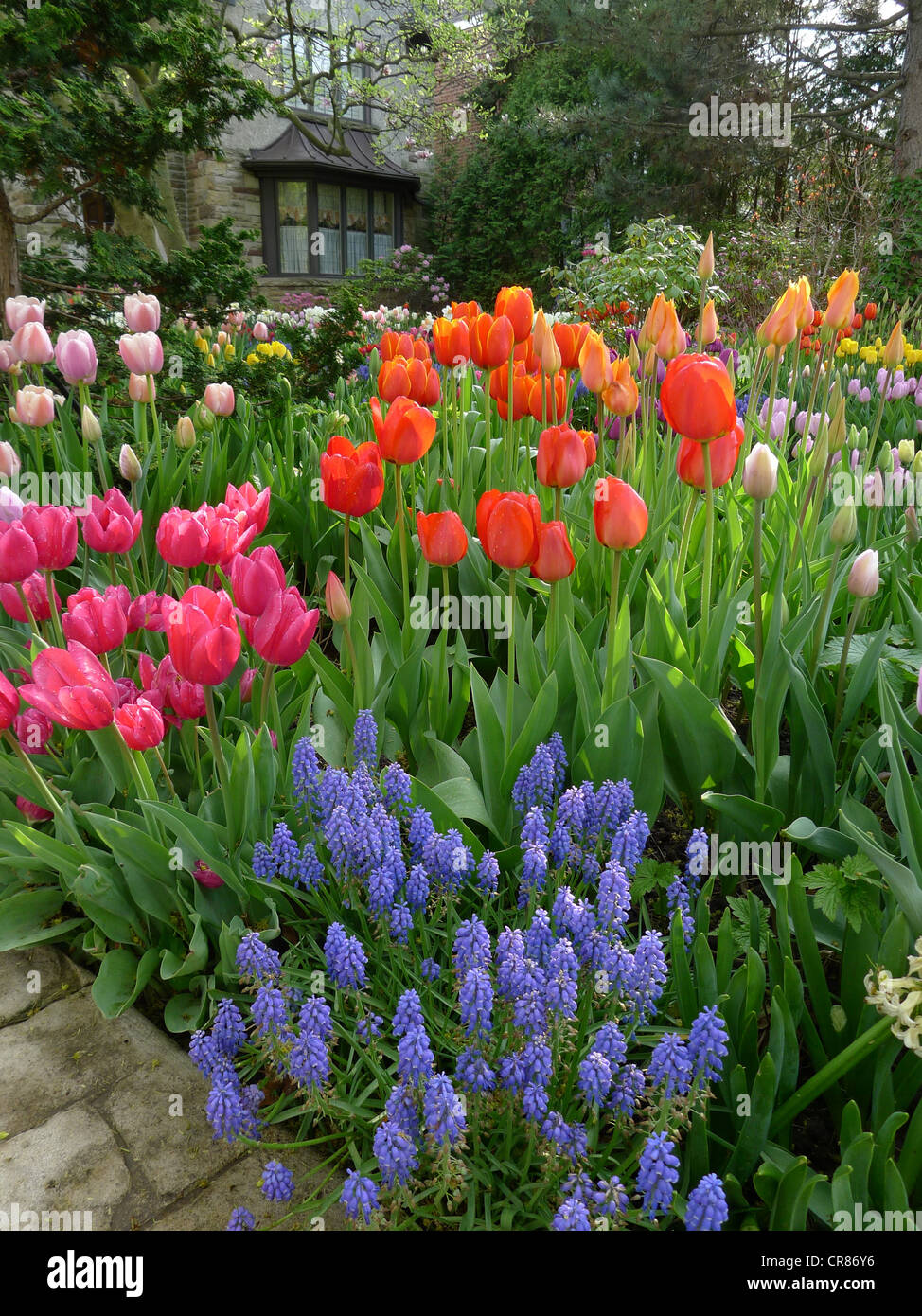 Front yard with spring flowers - Stock Image