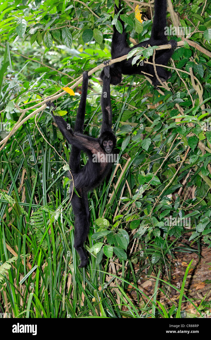 midget-hanging-on-tree-very-old-lesbians-and-young-lesbians