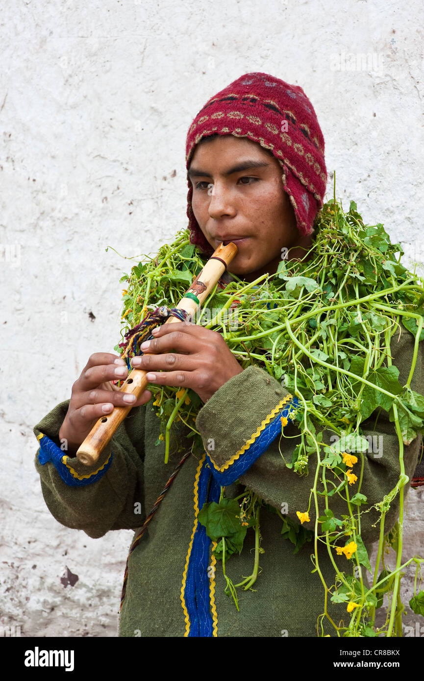 Peru, Cuzco Province, Huaro, young playing flute in traditional dress covered with plants for the corn feast, Sara - Stock Image