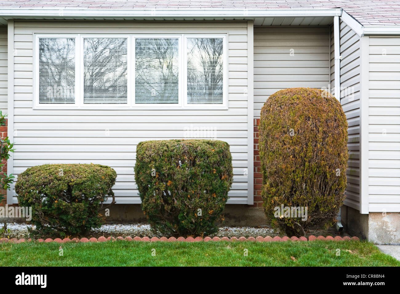 Trimmed hedges of different sizes - Stock Image