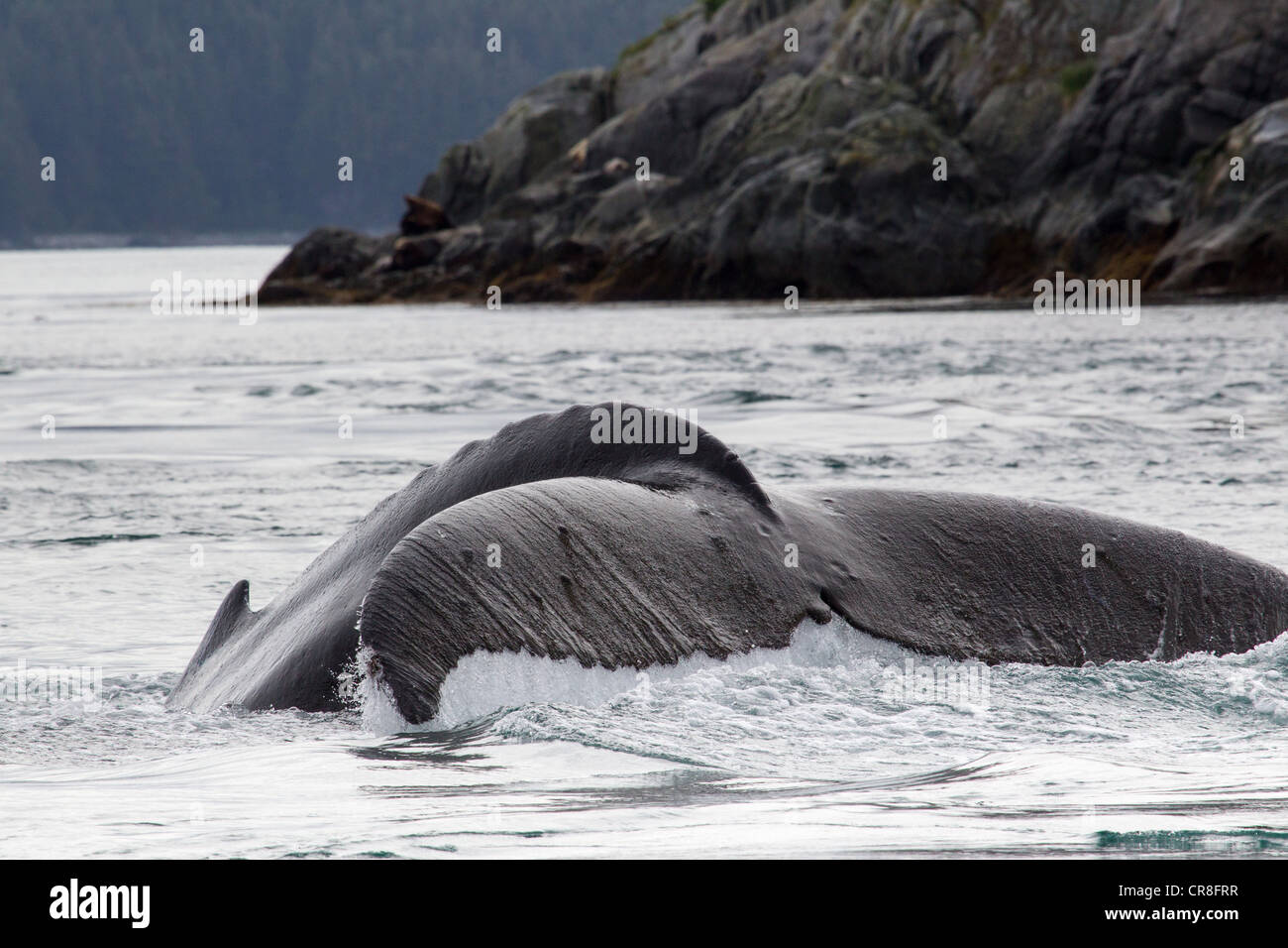 Tail of Humpback Whale Stock Photo