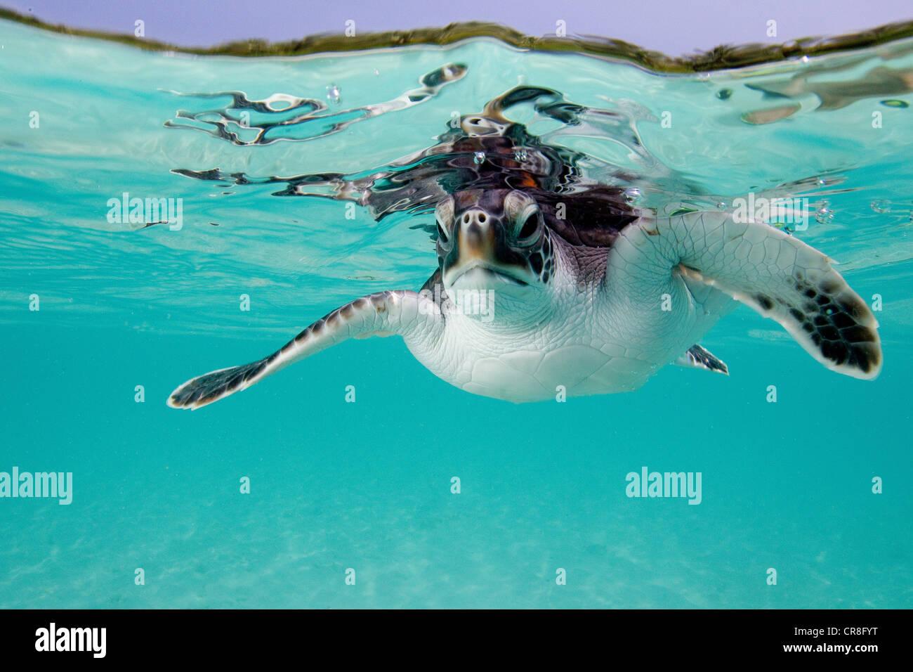 Anatomy Turtle Stock Photos & Anatomy Turtle Stock Images - Alamy
