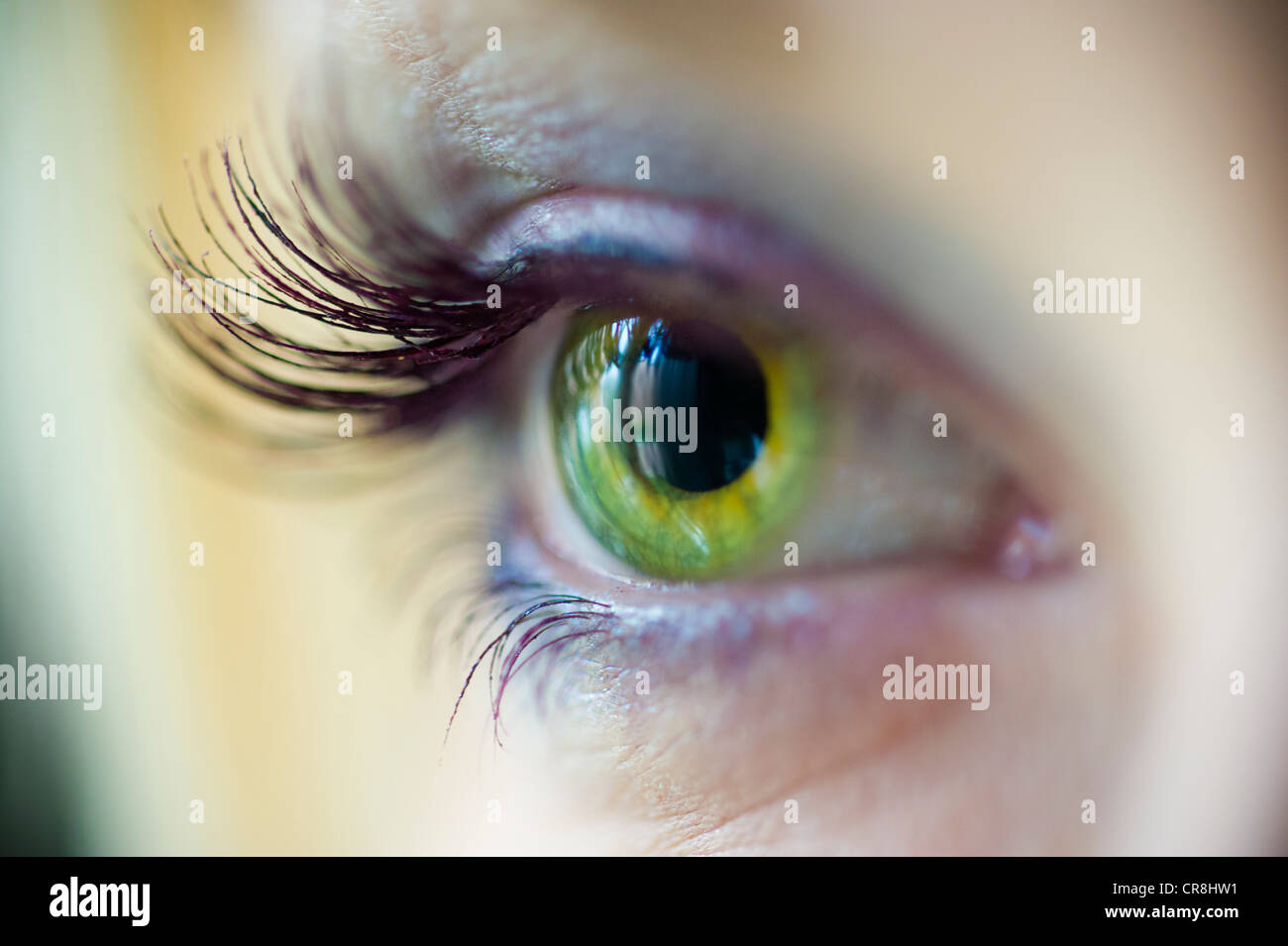 Green eye with long lashes - Stock Image