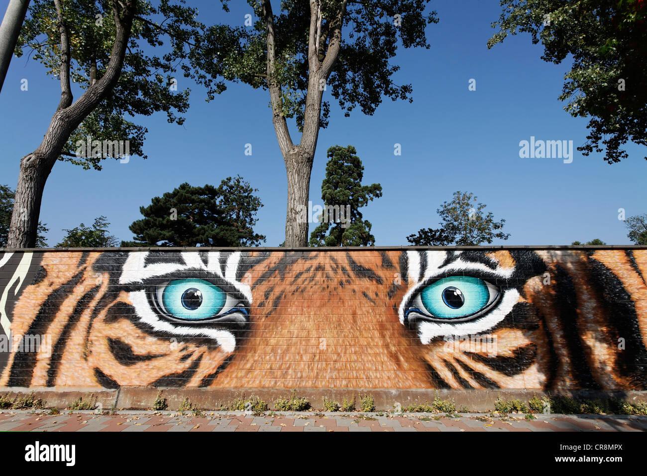 [Изображение: threatening-tiger-eyes-graffiti-on-the-w...CR8MPX.jpg]