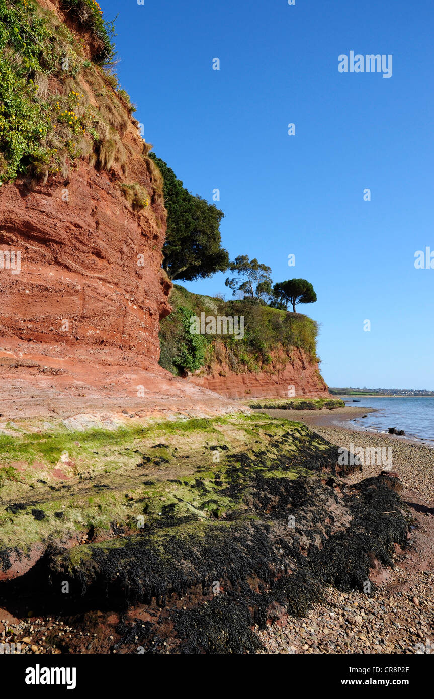Red rock cliffs on the river exe estuary, Lympstone, Devon, England, UK - Stock Image