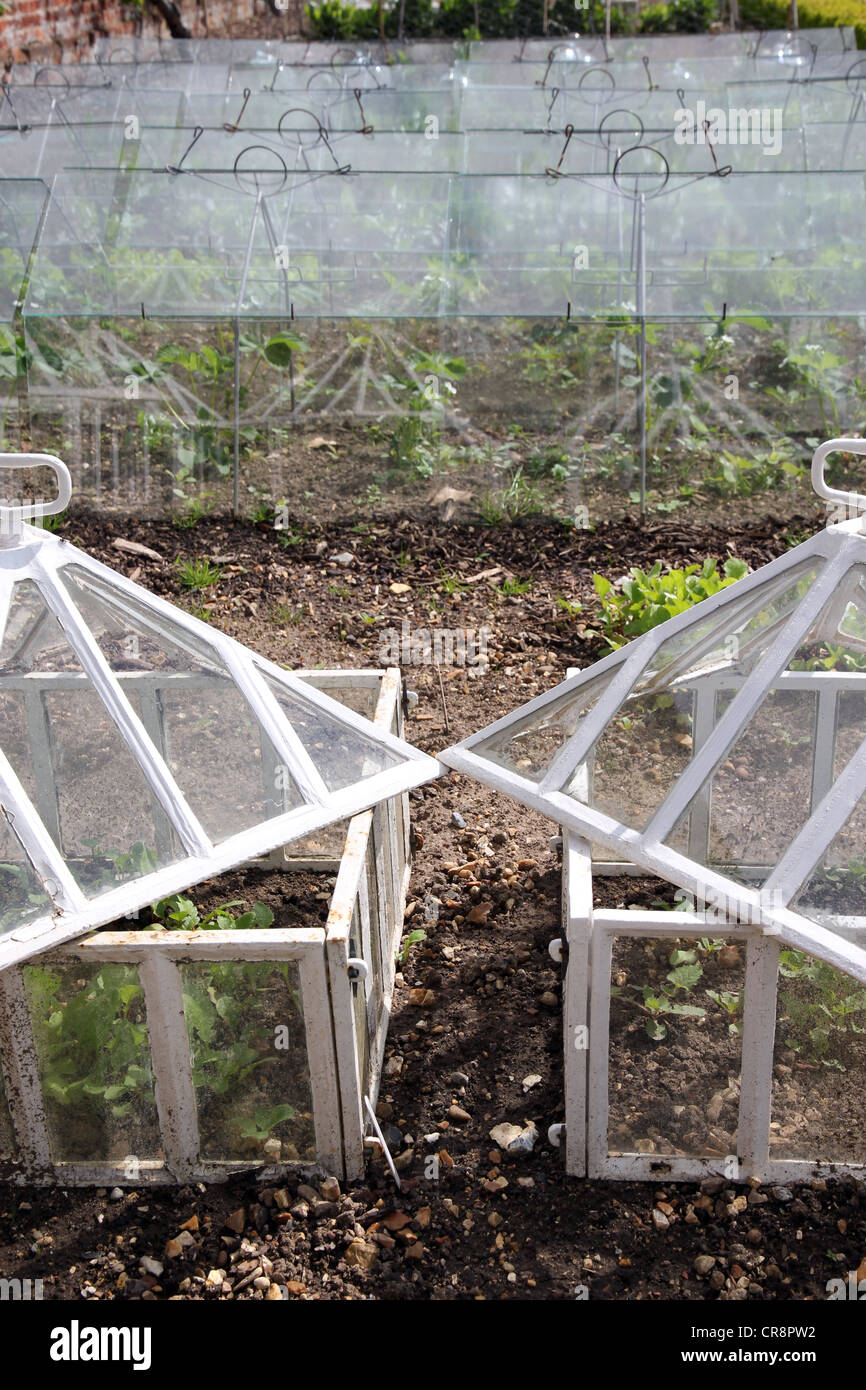 cold frames used in walled garden in stately home for growing salads - Stock Image