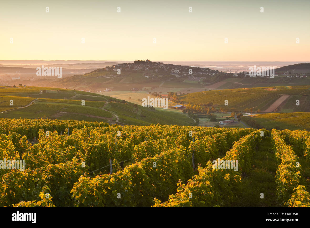 The vineyards of Sancerre in France. It is found in the Loire Valley area. bhz - Stock Image