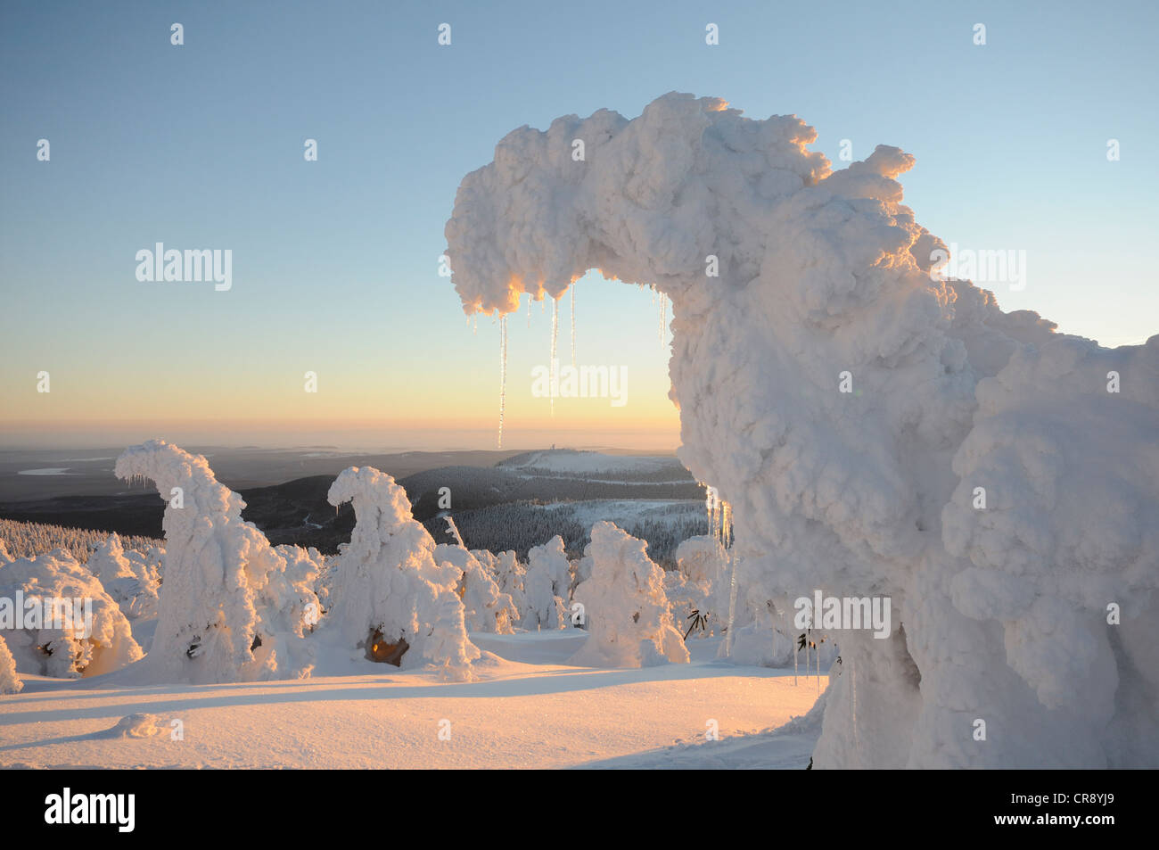Snow-covered spruces on Brocken Mountain, Saxony-Anhalt, Germany, Europe - Stock Image