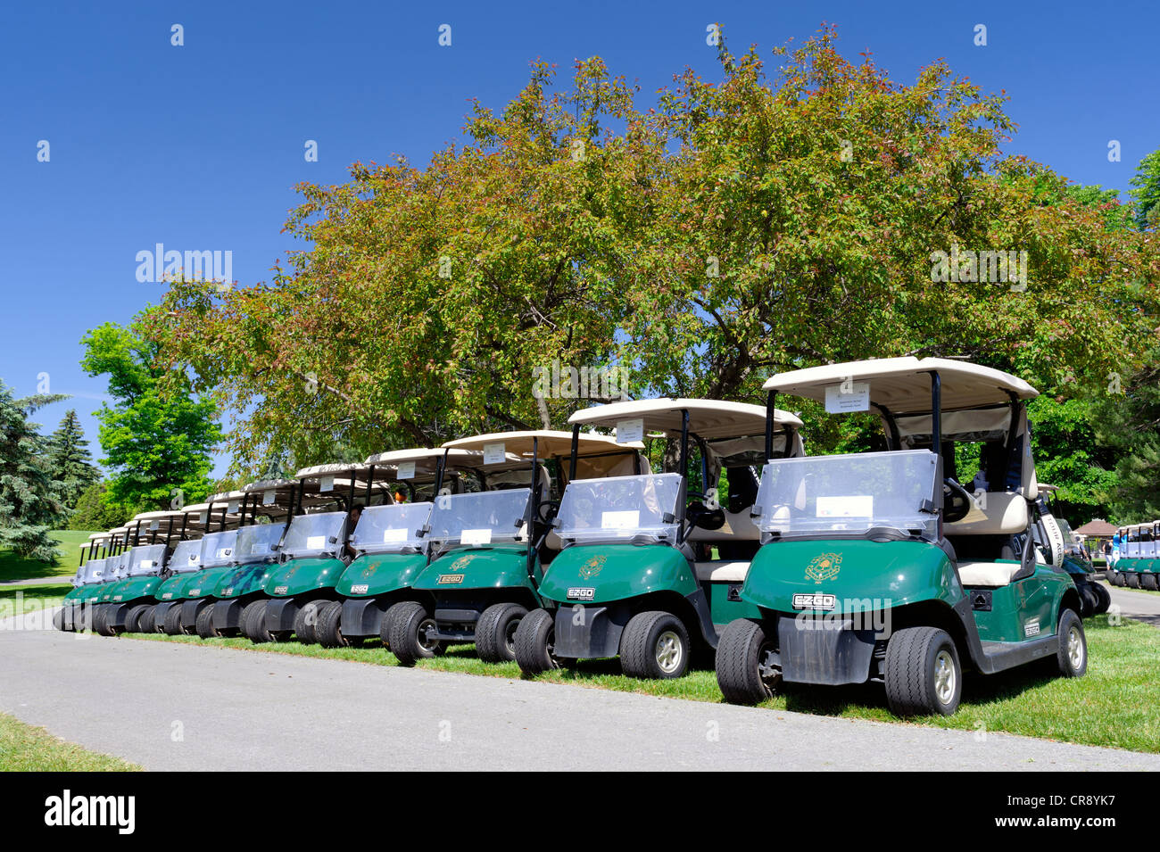 Motorized golf carts lined in a row before a shotgun start at a corporate golf tournament. - Stock Image