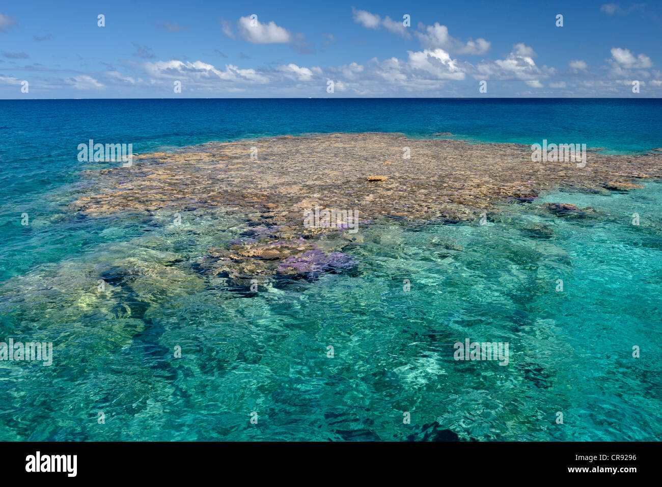 Coral heads, with the sun overhead, in Makemo atoll. Tuamotus, French Polynesia. Photographed with a polarising - Stock Image
