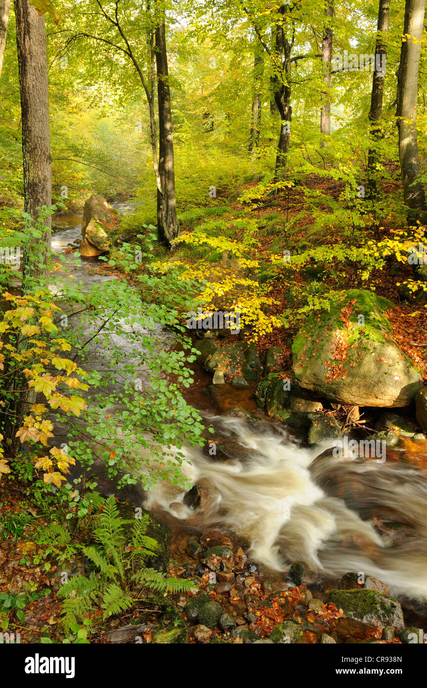 Ilse mountain stream in Ilsenburg, Saxony-Anhalt, Germany, Europe - Stock Image