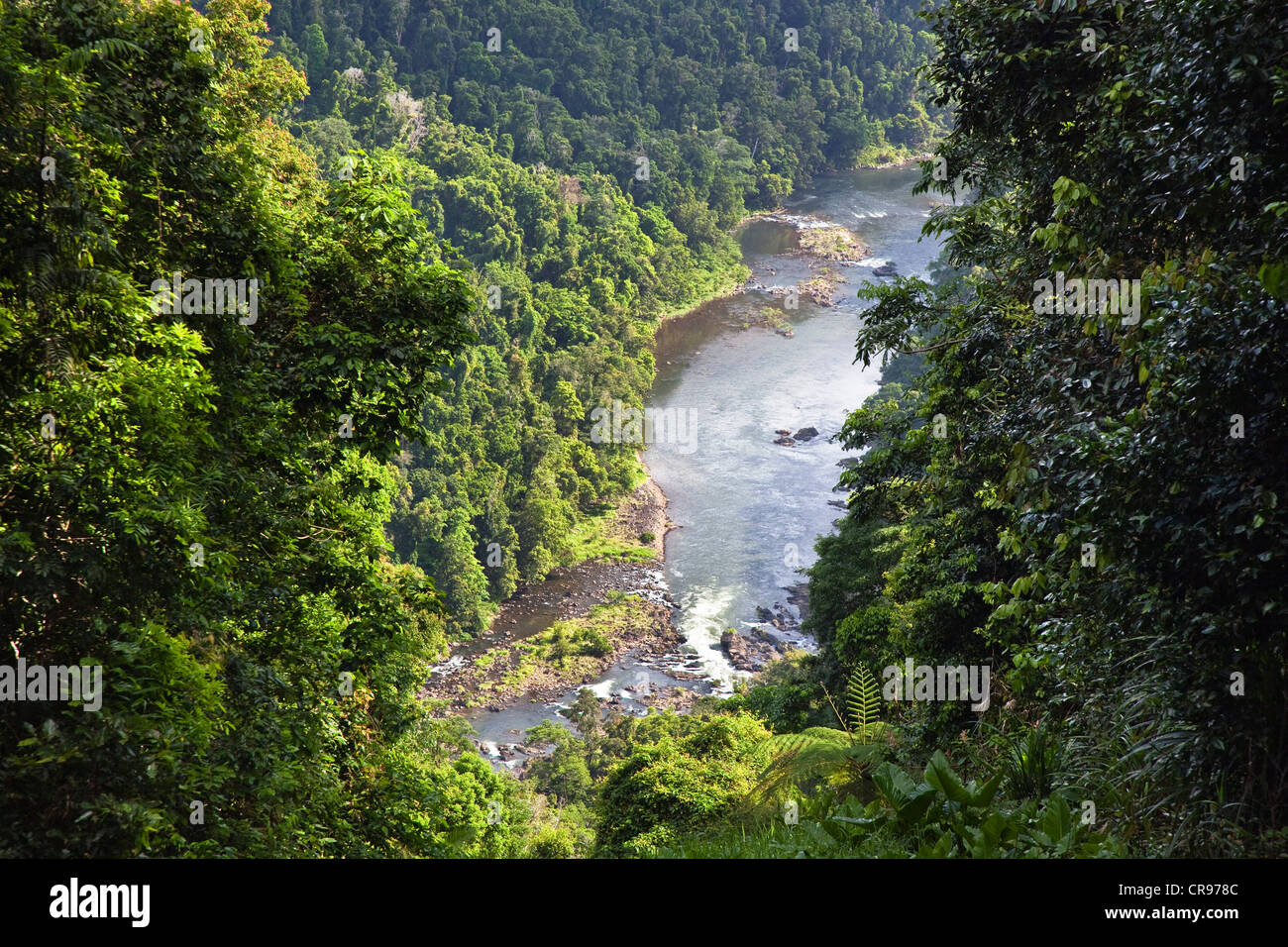 North johnstone river rainforest atherton tablelands for The atherton
