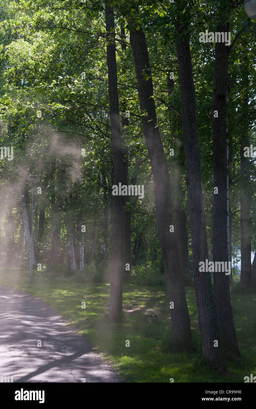 Smoke on the path - Stock Image