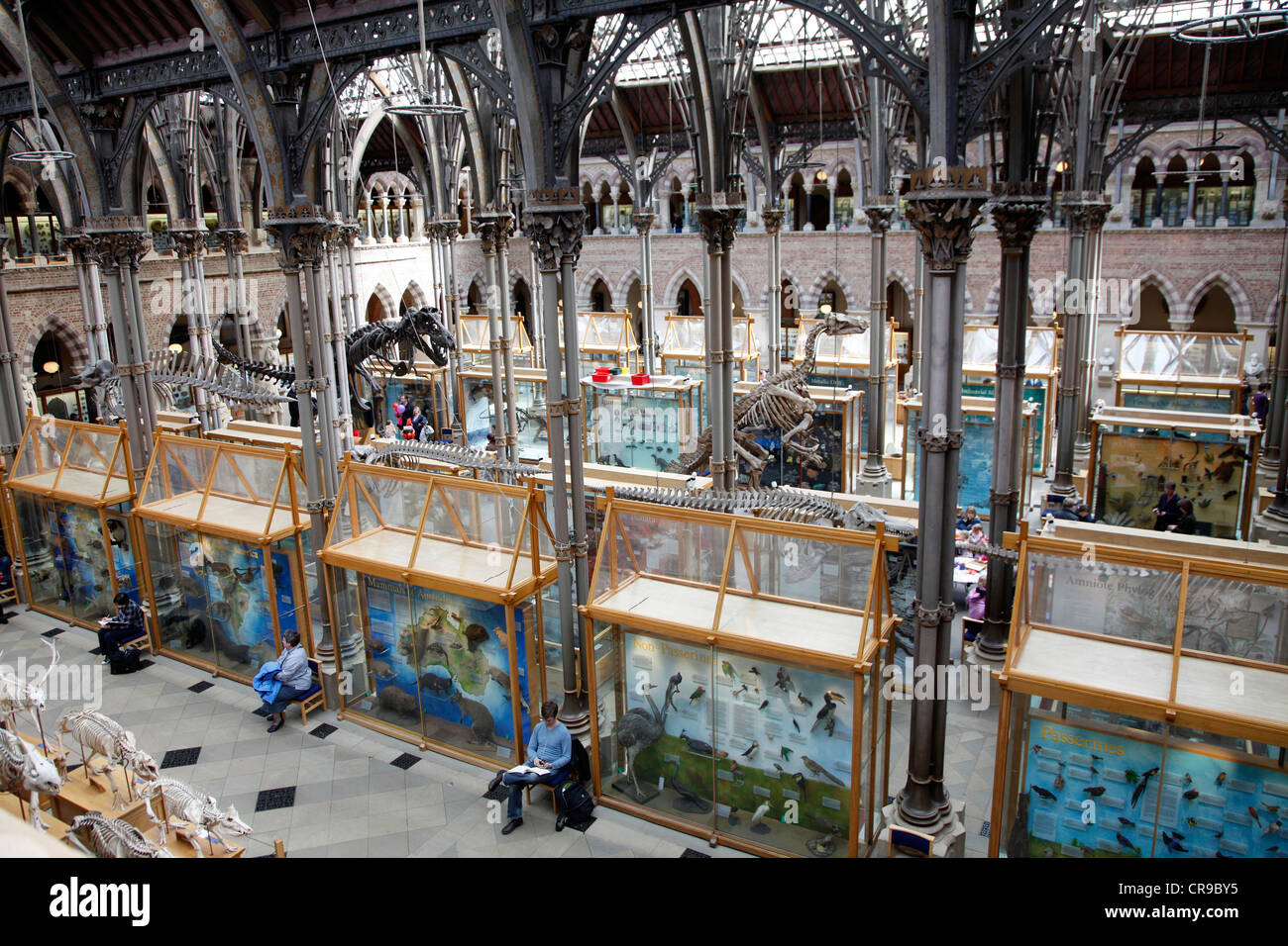 Oxford University Museum of Natural History, Natural History Museum of the University of Oxford. Oxford, Oxfordshire, - Stock Image