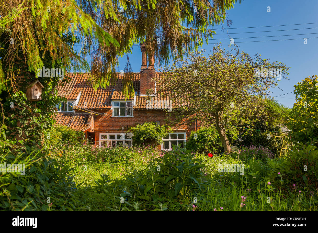 A country cottage in Suffolk , England , Britain , Uk - Stock Image