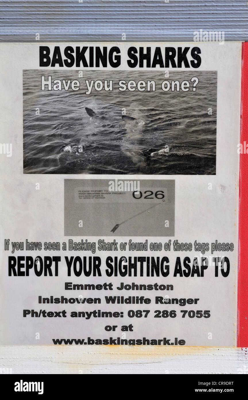 Basking Shark (Cethorinus maximus) sighting poster,Grencastle, Donegal, Ireland, Europe - Stock Image