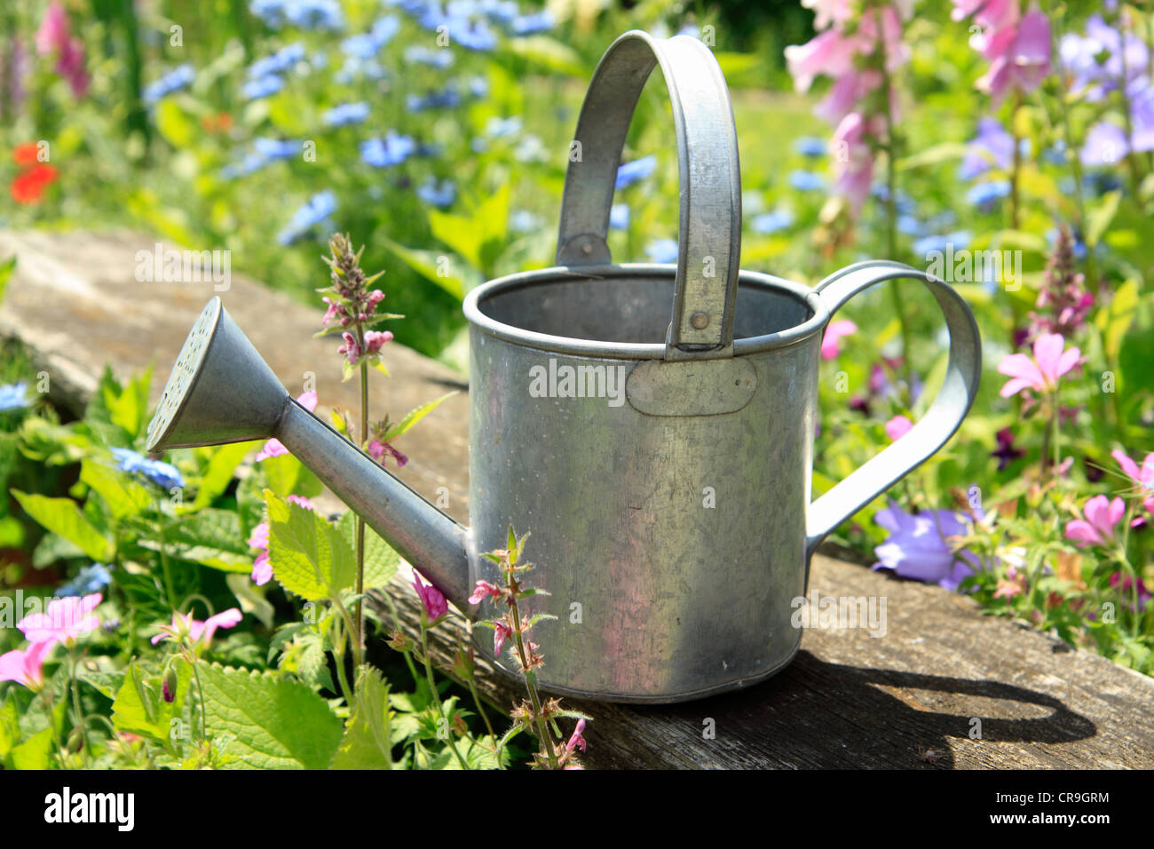 Small metal watering can in garden Stock Photo